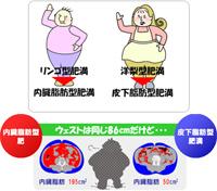 リンゴ型肥満⇒内臓脂肪型肥満 洋梨型肥満⇒皮下脂肪型肥満